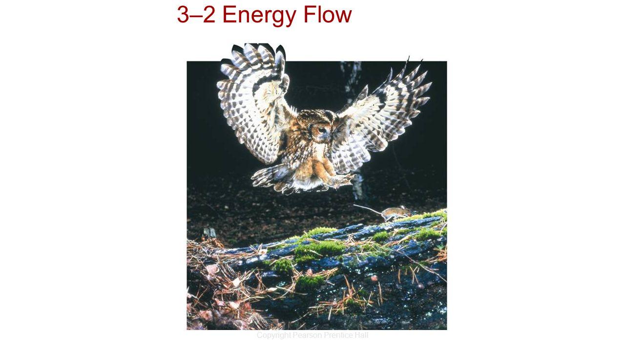 Copyright Pearson Prentice Hall 3–2 Energy Flow