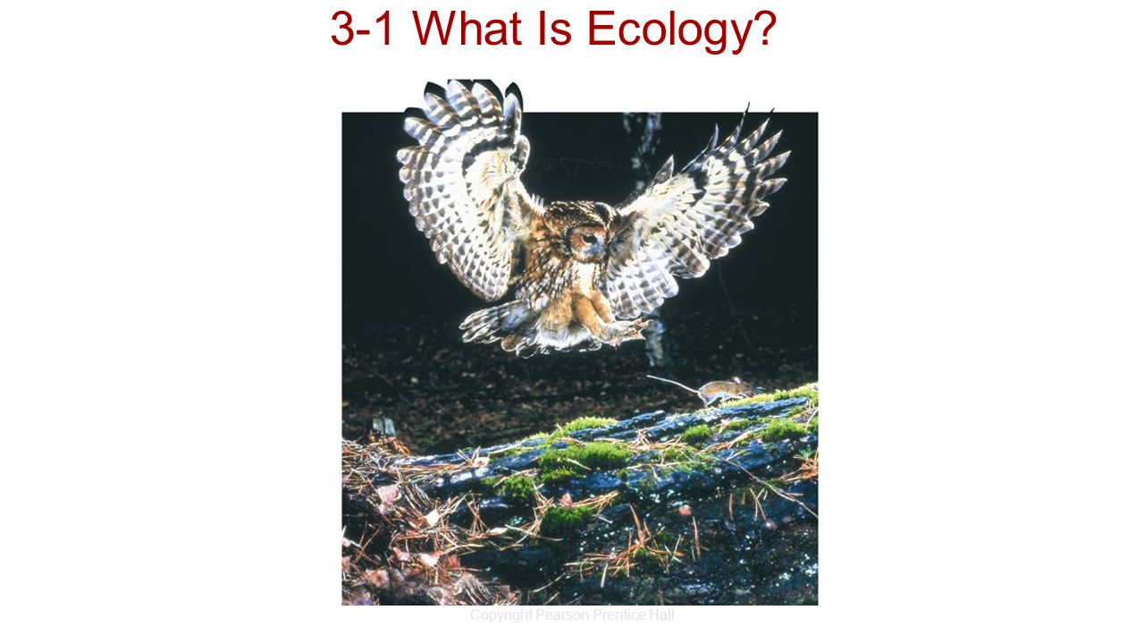 Copyright Pearson Prentice Hall 3-1 What Is Ecology?