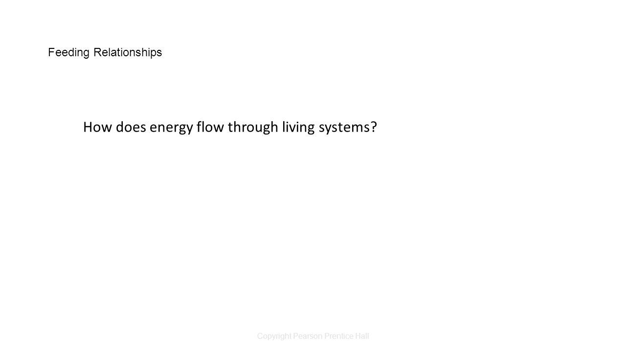 Copyright Pearson Prentice Hall Feeding Relationships How does energy flow through living systems?