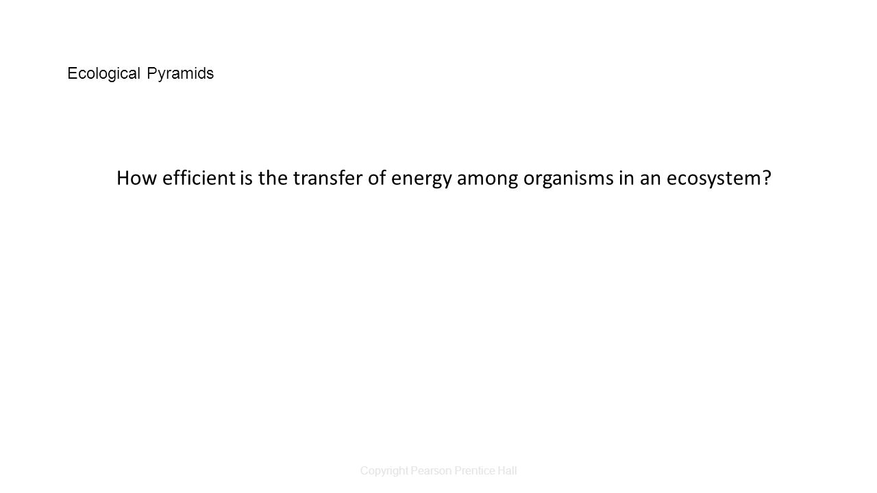 Copyright Pearson Prentice Hall Ecological Pyramids How efficient is the transfer of energy among organisms in an ecosystem?