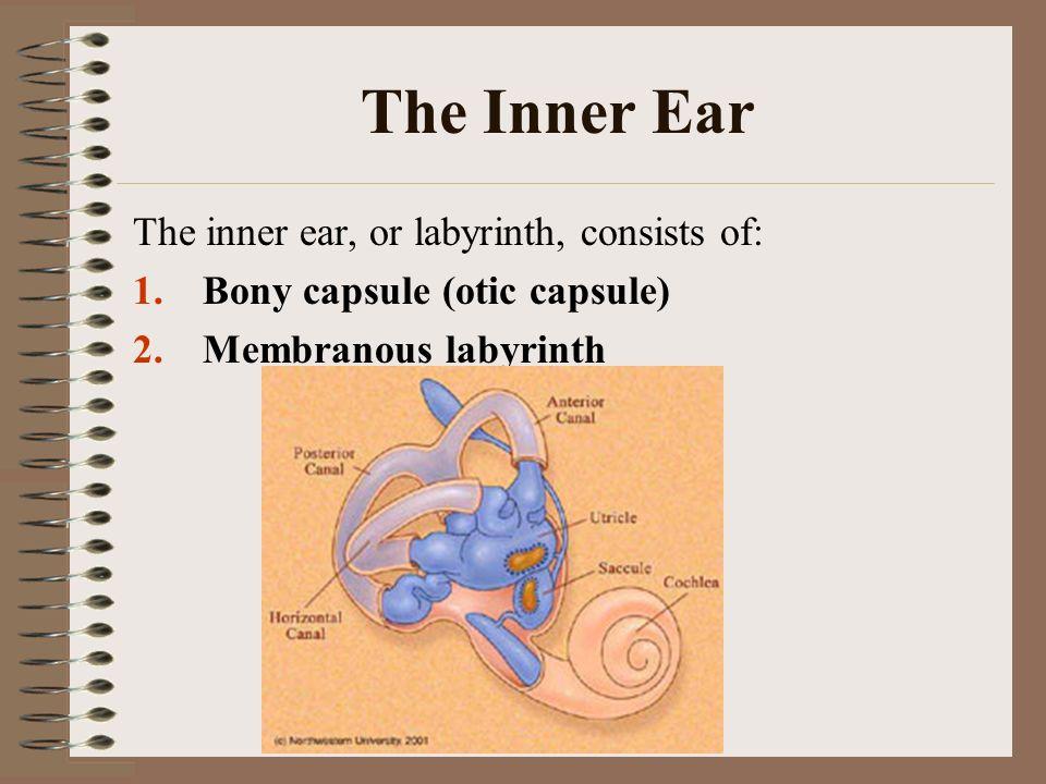 The Ear The Ear Ppt Video