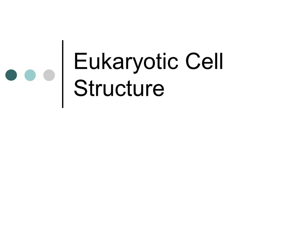 Eukaryotic Cell Structure. The Cell ESSENTIAL to the study of ...