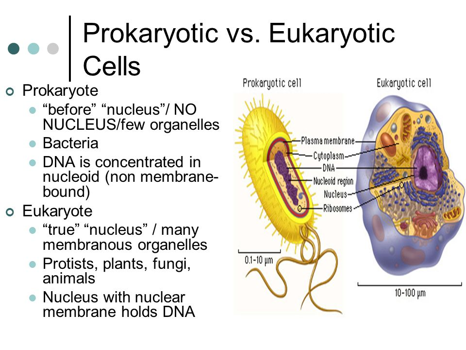 prokaryotic vs eukaryotic cells An essay on the differences between prokaryote & eukaryote cells all cellular in prokaryotic cells the ribosome are 70s in eukaryotic cells the ribosomes.