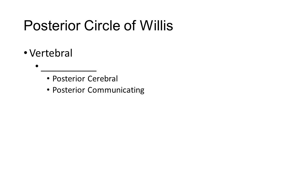 Posterior Circle of Willis Vertebral ___________ Posterior Cerebral Posterior Communicating