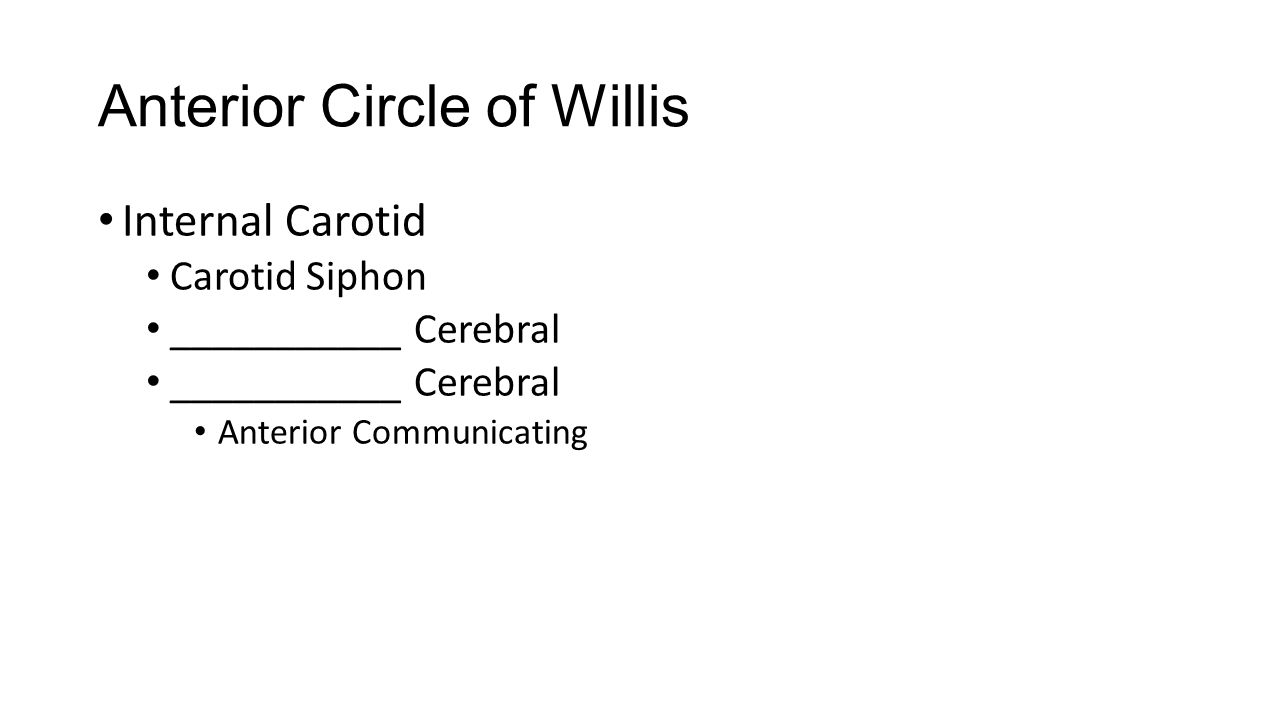 Anterior Circle of Willis Internal Carotid Carotid Siphon ___________ Cerebral Anterior Communicating