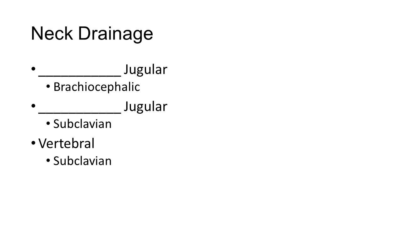 Neck Drainage ___________ Jugular Brachiocephalic ___________ Jugular Subclavian Vertebral Subclavian