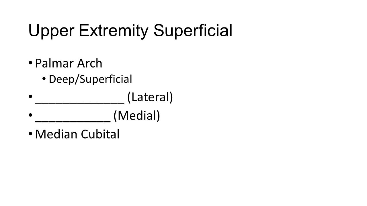 Upper Extremity Superficial Palmar Arch Deep/Superficial _____________ (Lateral) ___________ (Medial) Median Cubital