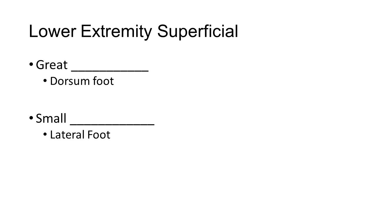 Lower Extremity Superficial Great ___________ Dorsum foot Small ____________ Lateral Foot