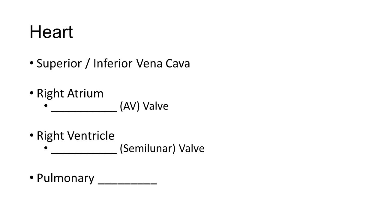 Heart Superior / Inferior Vena Cava Right Atrium ___________ (AV) Valve Right Ventricle ___________ (Semilunar) Valve Pulmonary _________