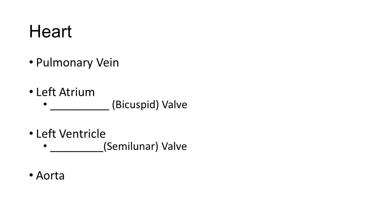 Heart Pulmonary Vein Left Atrium __________ (Bicuspid) Valve Left Ventricle _________(Semilunar) Valve Aorta