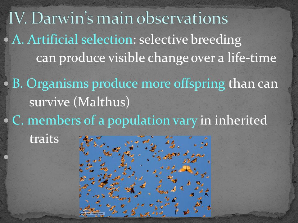 A. Artificial selection: selective breeding can produce visible change over a life-time B.