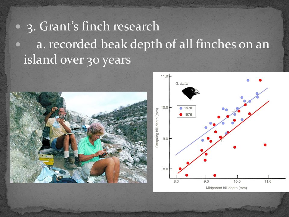 3. Grant's finch research a. recorded beak depth of all finches on an island over 30 years