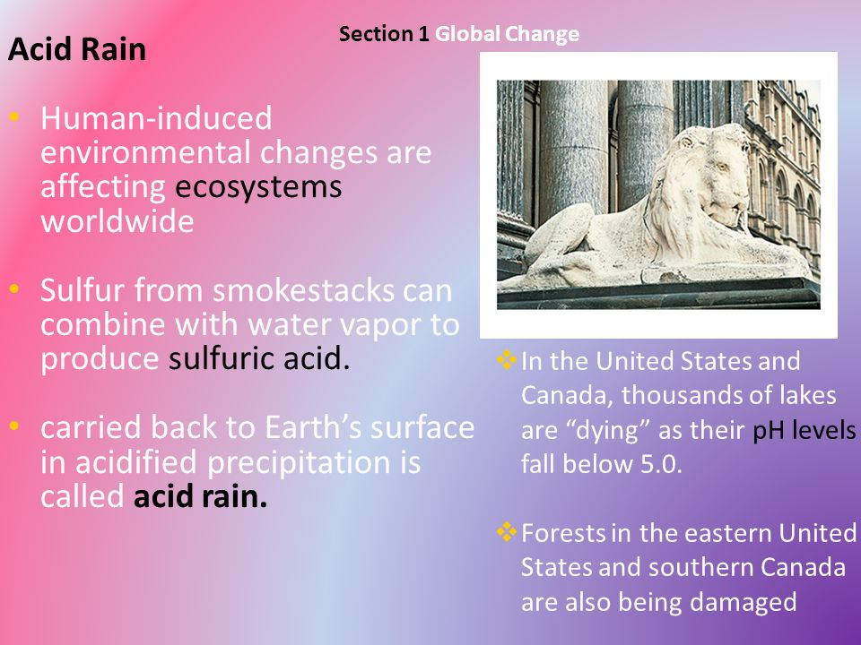 how acid rain forms and its effects on humans and the environment Other acid rain essays acid rain and land but one of the serious side effects of acid rain on human is one of its many forms acid rain can also harm.