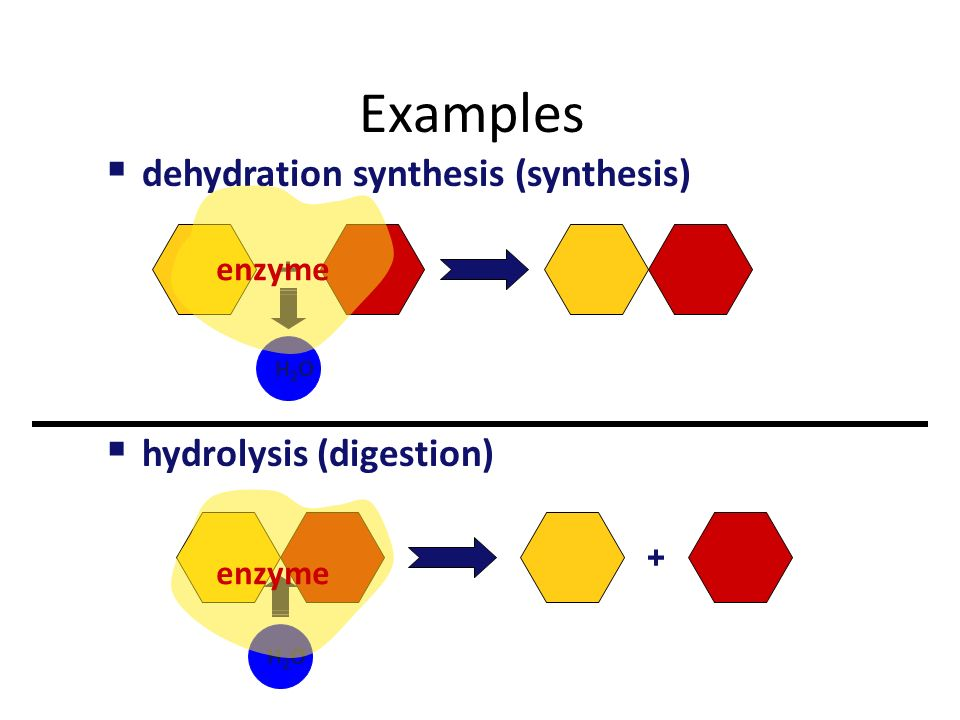 Organic reactions in steroid chemistry