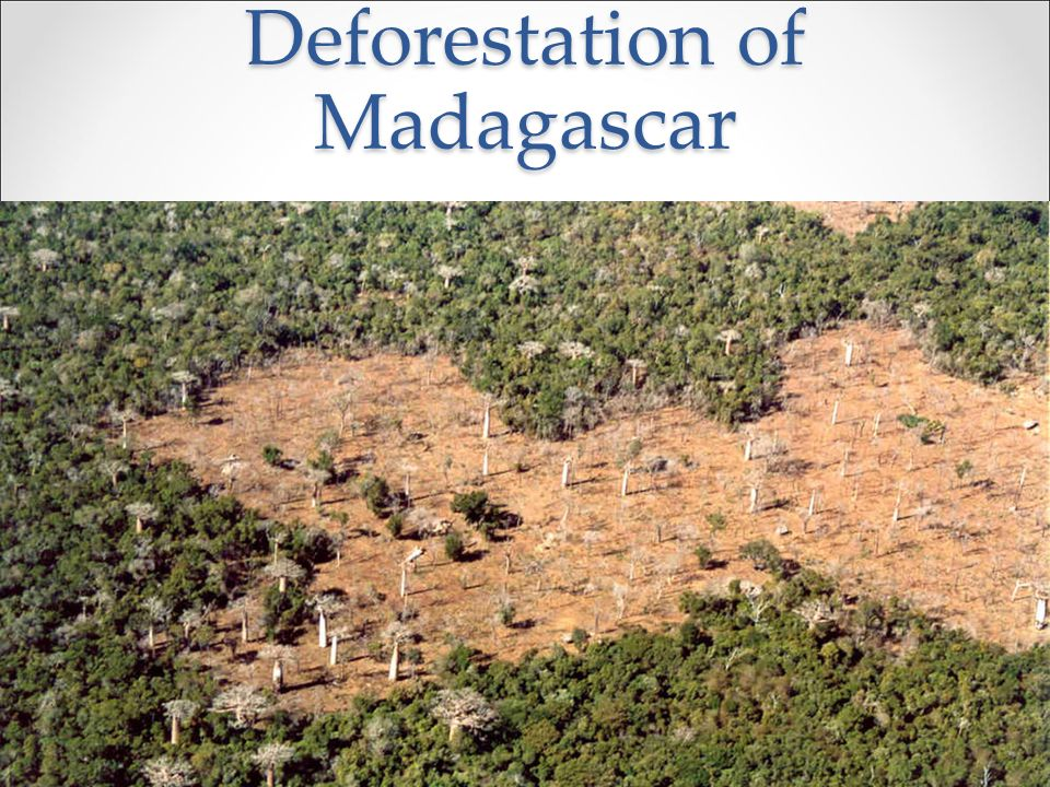 Deforestation of Madagascar