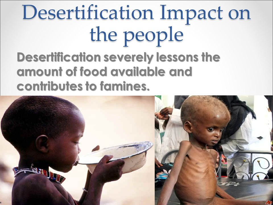 Desertification Impact on the people Desertification severely lessons the amount of food available and contributes to famines.