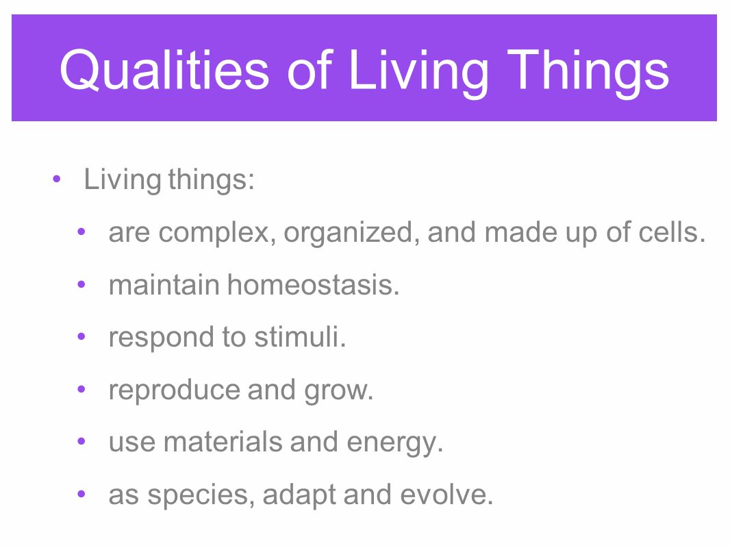 4 things cells do to maintain homeostasis - Qualities Of Living Things Living Things Are Complex Organized And Made Up Of 4 Cells