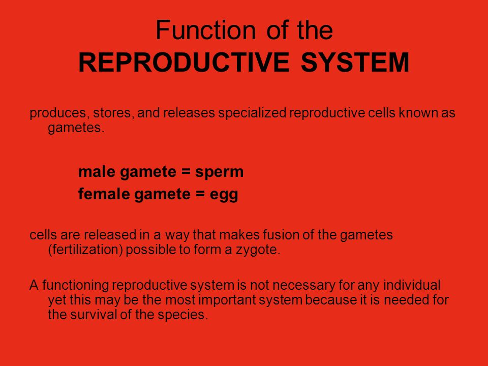 Function of the REPRODUCTIVE SYSTEM produces, stores, and releases specialized reproductive cells known as gametes. male gamete = sperm female gamete