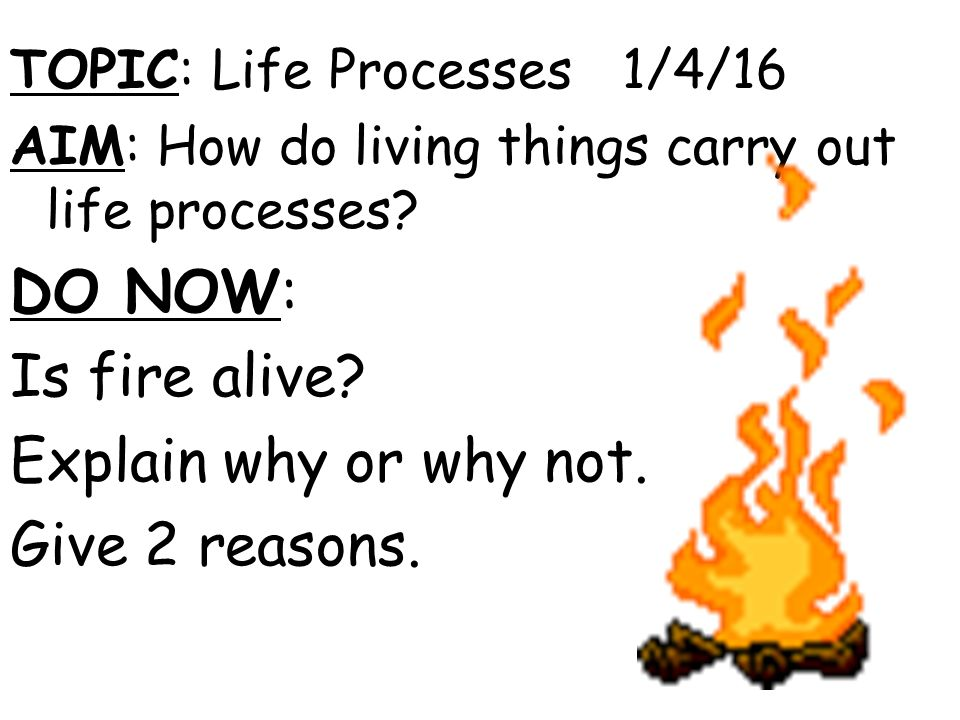 Why do we carry on living?