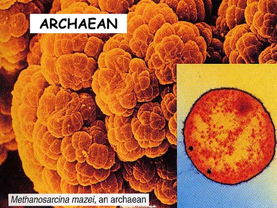 28 ARCHAEAN copyright cmassengale