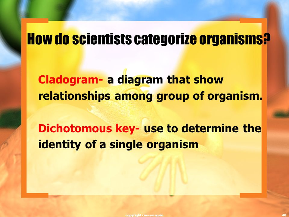 How do scientists categorize organisms.
