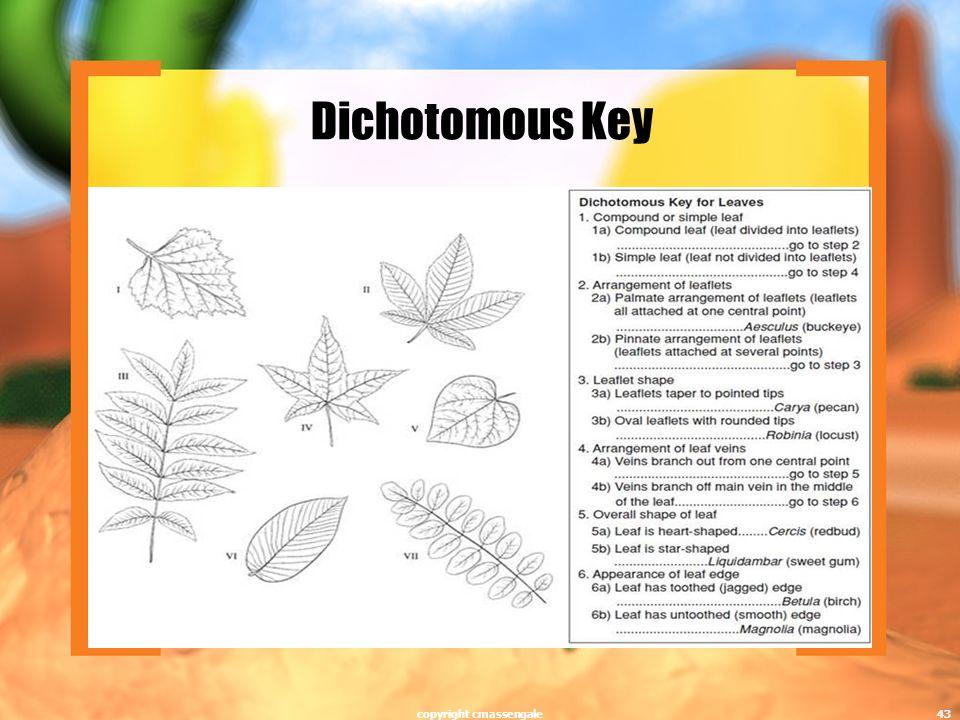 Dichotomous Key copyright cmassengale43