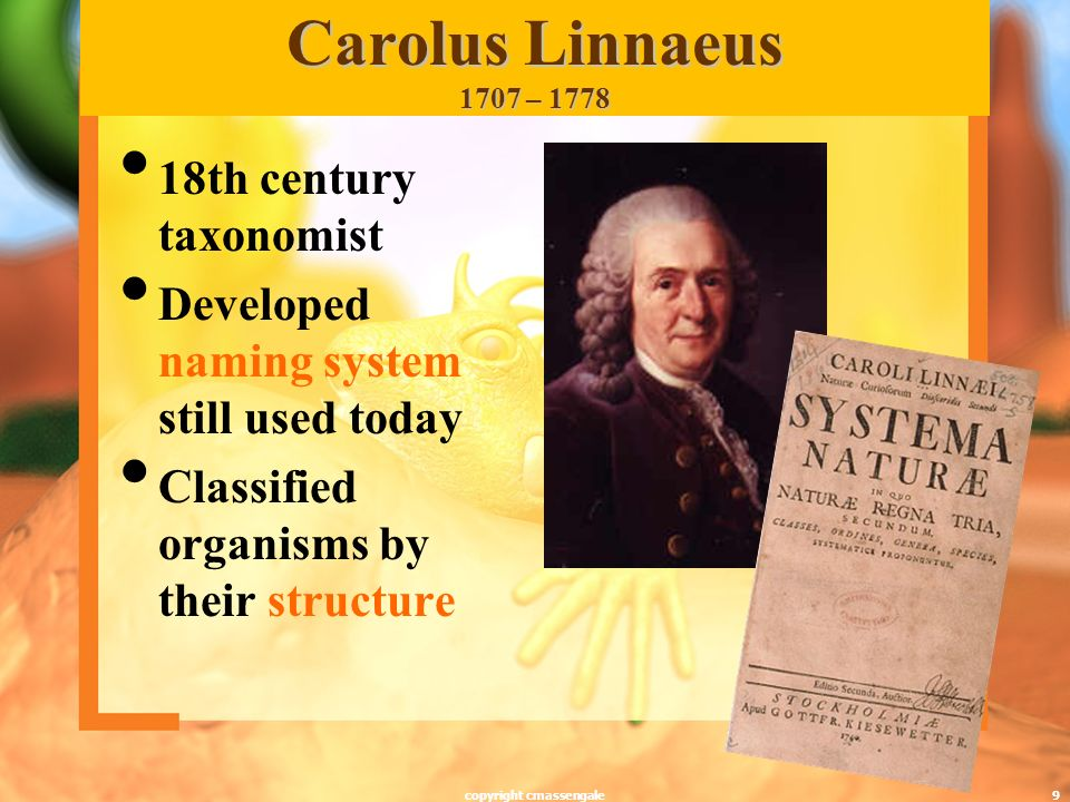 9 Carolus Linnaeus 1707 – 1778 18th century taxonomist Developed naming system still used today Classified organisms by their structure copyright cmassengale