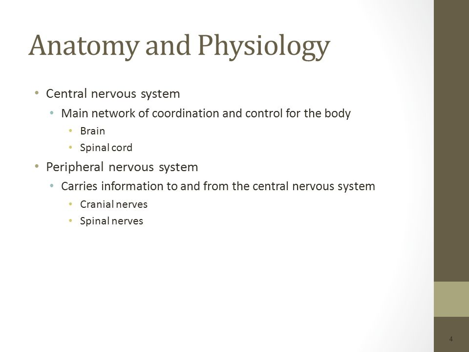 Neurologic System Chapter 22. Neurologic System The nervous system ...