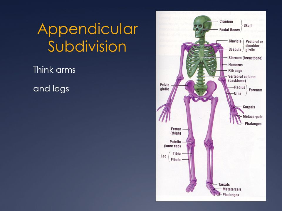 Atemberaubend Essentials Of Human Anatomy And Physiology Chapter 5 ...