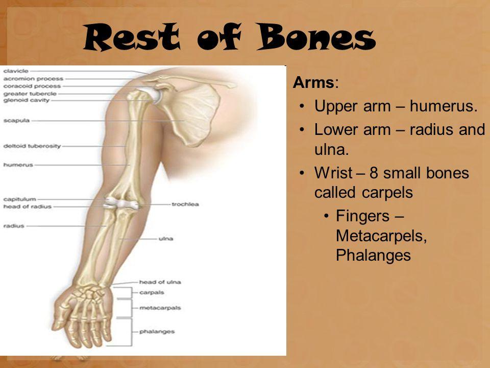 Skeleton Chapter 7 Skeletal System The Bones Of Your Skeleton Are
