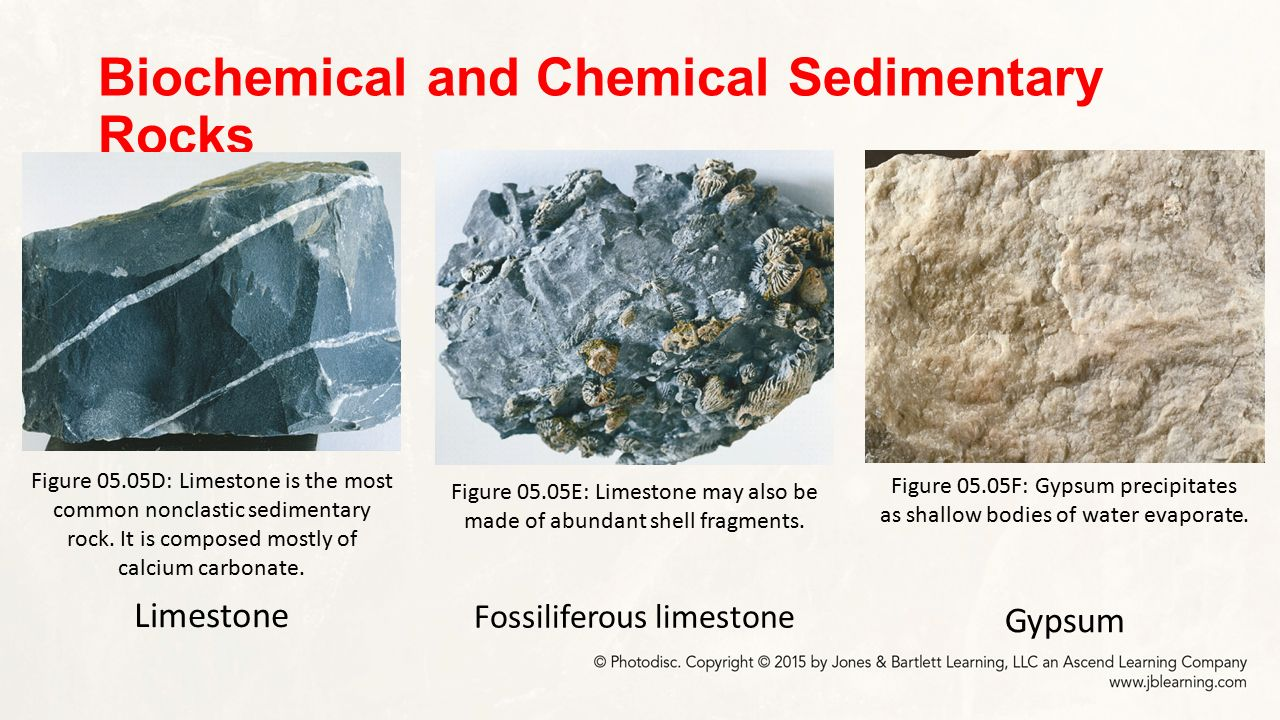 Biochemical sedimentary rock