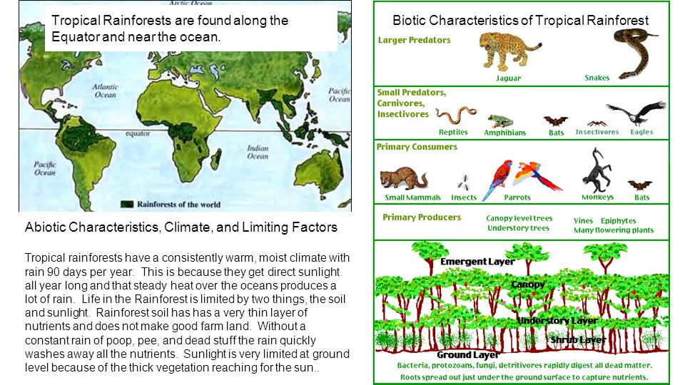 World Biomes Research By: Ms. Bebout. Tropical Rainforest Biome ...