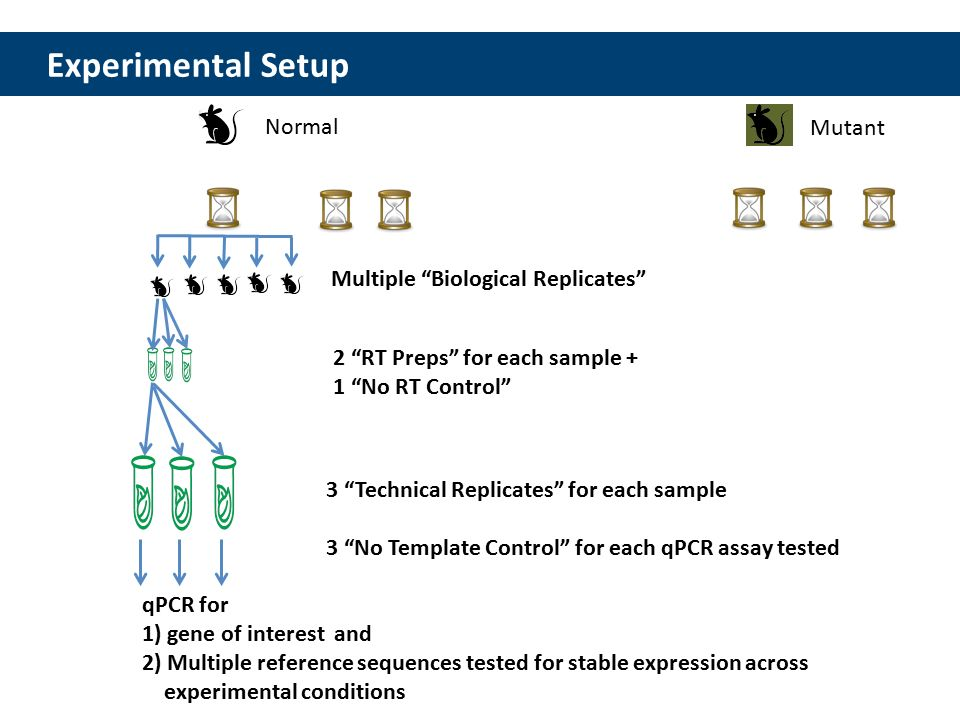 Integrated dna technologies technical tips for qpcr sample and 14 13 experimental pronofoot35fo Choice Image