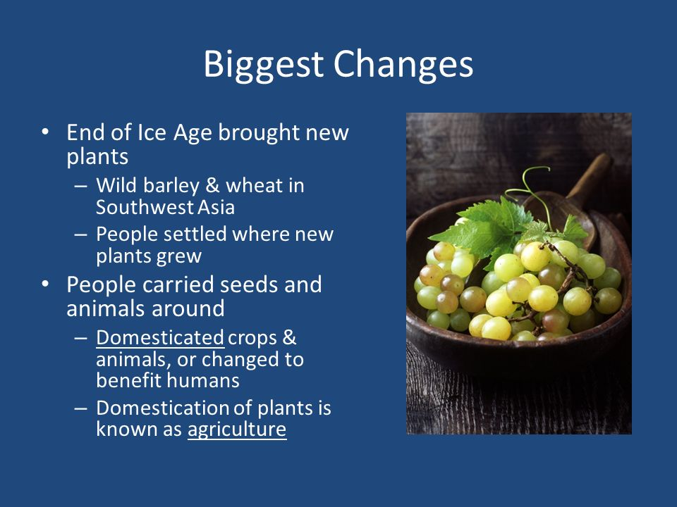 Biggest Changes End of Ice Age brought new plants – Wild barley & wheat in Southwest Asia – People settled where new plants grew People carried seeds and animals around – Domesticated crops & animals, or changed to benefit humans – Domestication of plants is known as agriculture