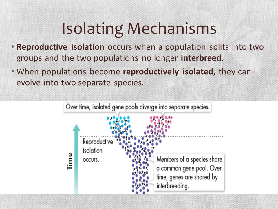 reproductive isolating mechanisms essay Essay v: evolution for christians i've chosen this title for the essay on biological these conditions are called reproductive isolating mechanisms.