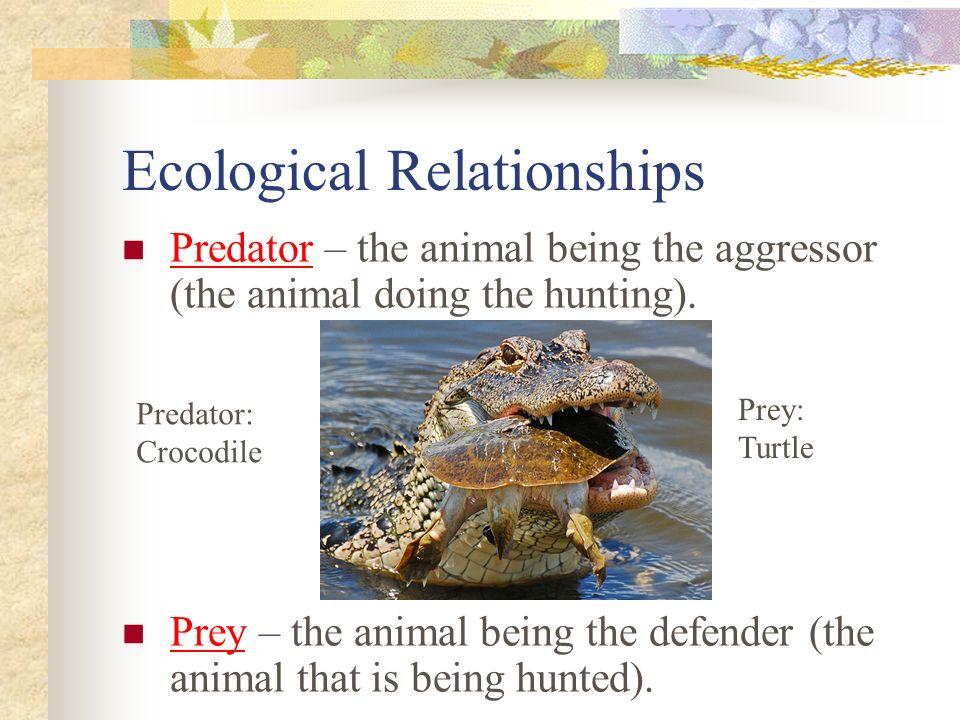 Ecological Relationships Predator – the animal being the aggressor (the animal doing the hunting).