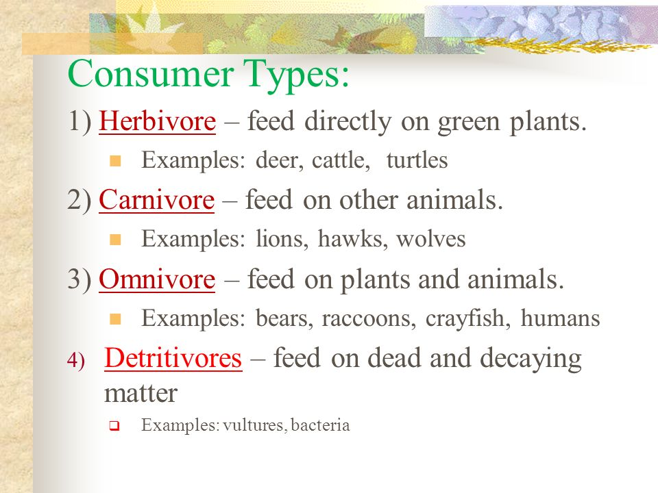 Consumer Types: 1) Herbivore – feed directly on green plants.