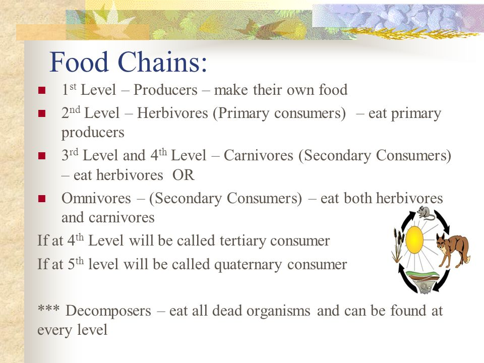 Food Chains: 1 st Level – Producers – make their own food 2 nd Level – Herbivores (Primary consumers) – eat primary producers 3 rd Level and 4 th Level – Carnivores (Secondary Consumers) – eat herbivores OR Omnivores – (Secondary Consumers) – eat both herbivores and carnivores If at 4 th Level will be called tertiary consumer If at 5 th level will be called quaternary consumer *** Decomposers – eat all dead organisms and can be found at every level