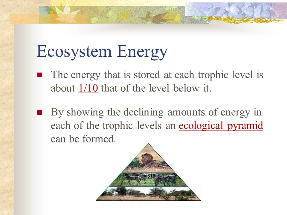 Ecosystem Energy The energy that is stored at each trophic level is about 1/10 that of the level below it.