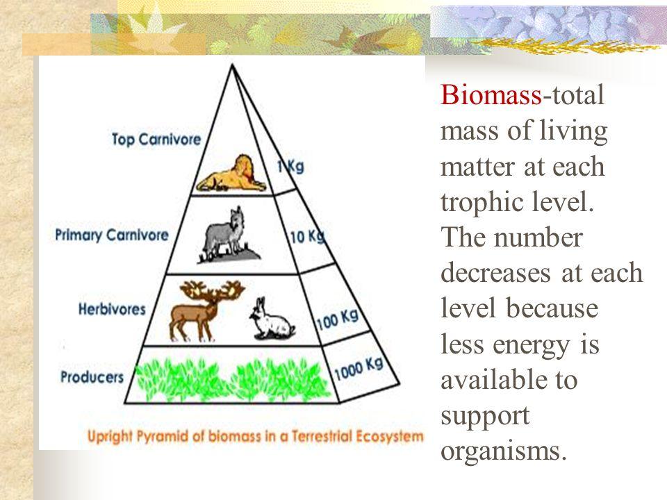 Biomass-total mass of living matter at each trophic level.