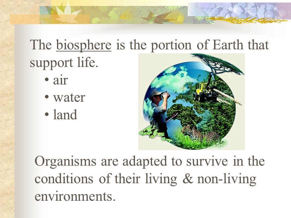 The biosphere is the portion of Earth that support life.