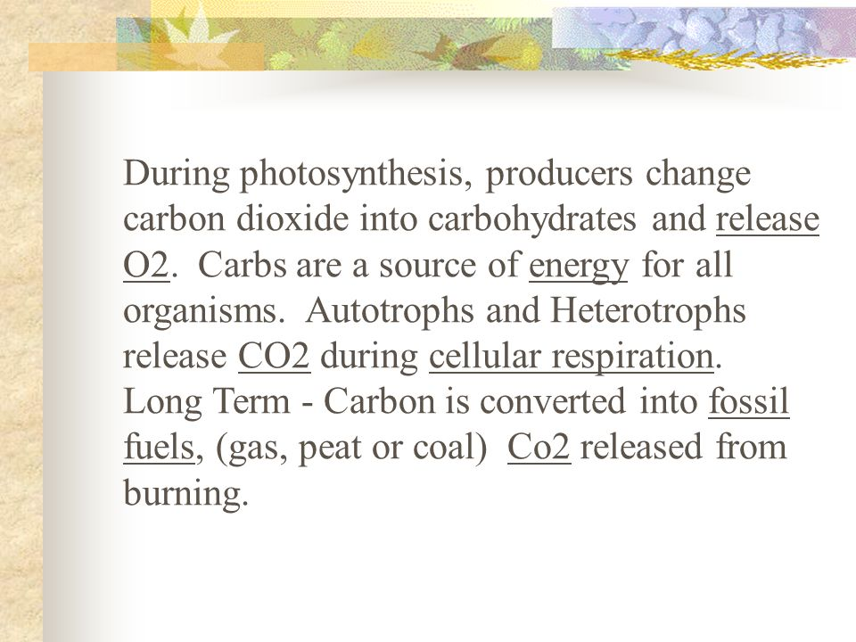 During photosynthesis, producers change carbon dioxide into carbohydrates and release O2.
