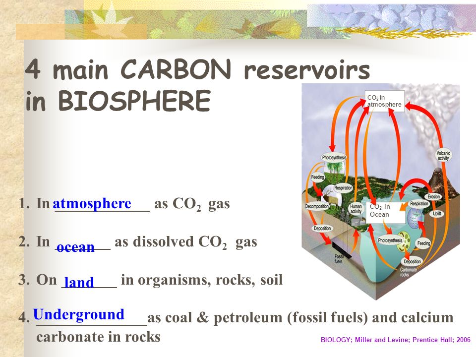 4 main CARBON reservoirs in BIOSPHERE CO 2 in atmosphere CO 2 in Ocean BIOLOGY; Miller and Levine; Prentice Hall; 2006 1.In ____________ as CO 2 gas 2.In _______ as dissolved CO 2 gas 3.On _______ in organisms, rocks, soil 4.______________as coal & petroleum (fossil fuels) and calcium carbonate in rocks atmosphere ocean land Underground