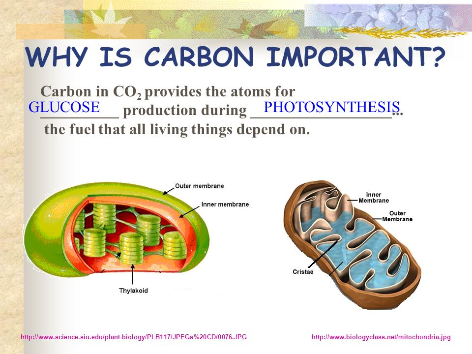 WHY IS CARBON IMPORTANT.