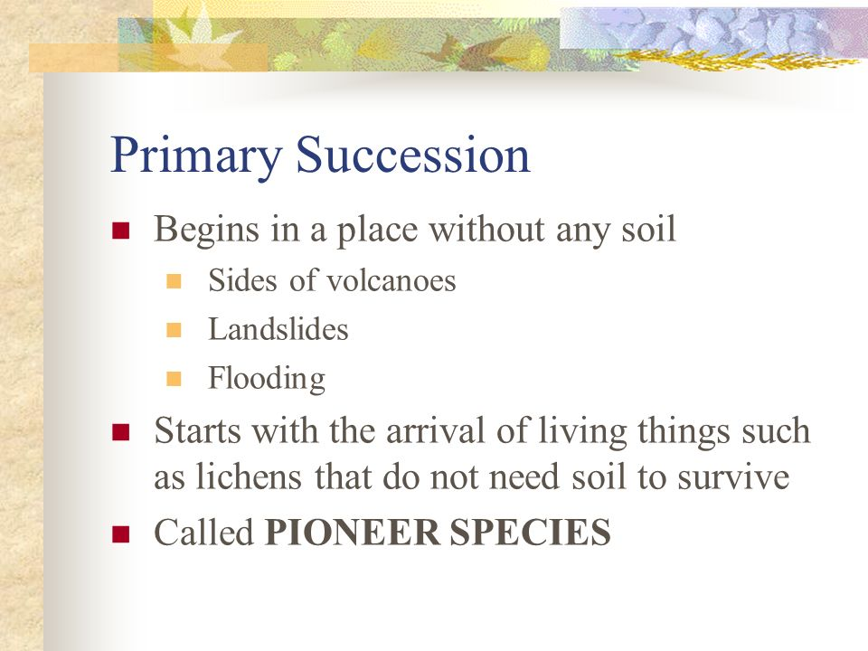 Primary Succession Begins in a place without any soil Sides of volcanoes Landslides Flooding Starts with the arrival of living things such as lichens that do not need soil to survive Called PIONEER SPECIES