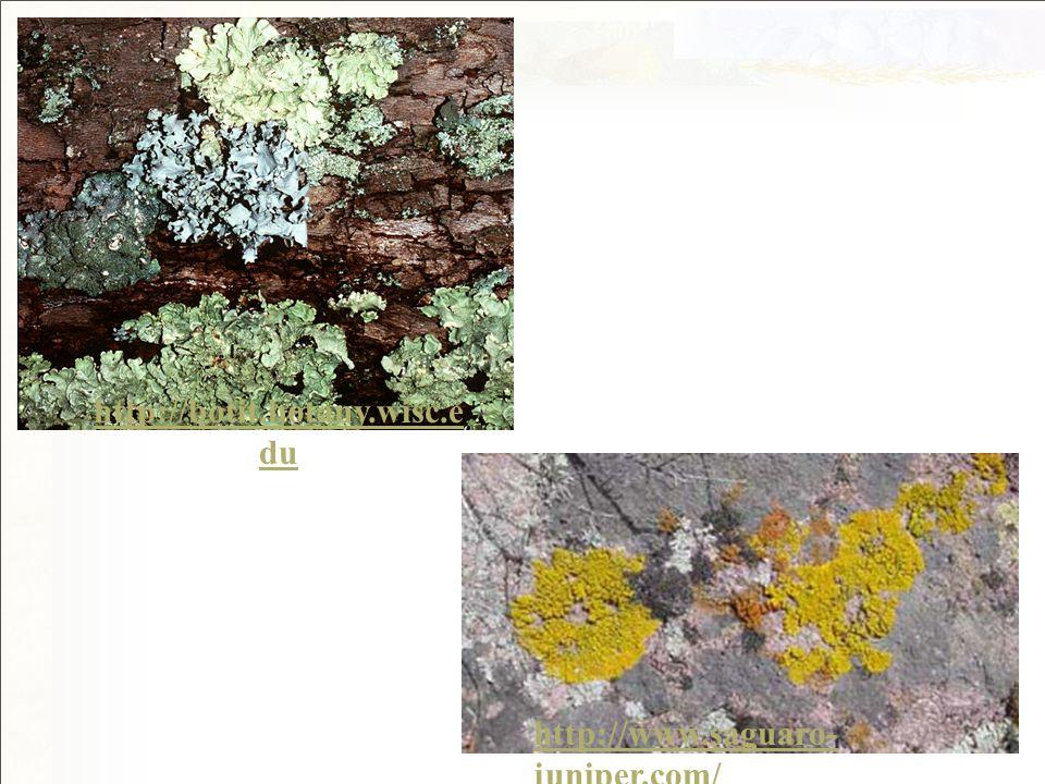 http://botit.botany.wisc.e du http://www.saguaro- juniper.com/