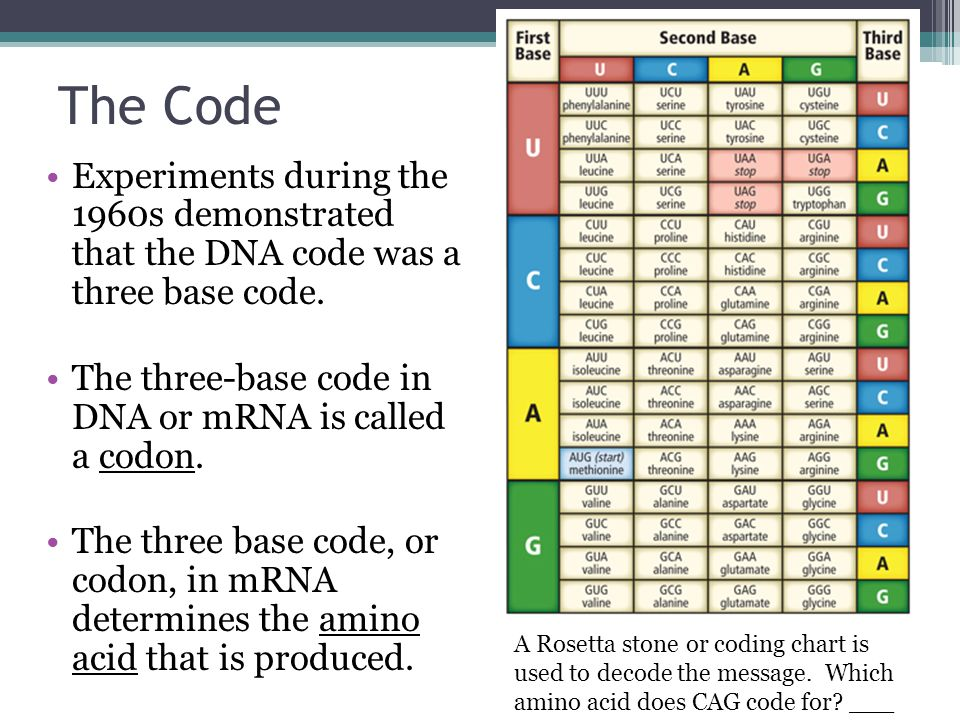 Protein Synthesis Notes. Main Idea DNA codes for RNA, which guides ...