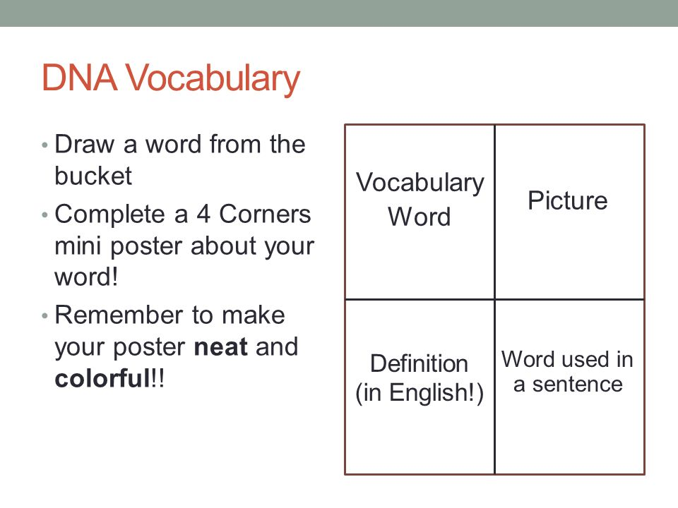 Dna vocabulary draw a word from the bucket complete a 4 corners 1 dna vocabulary malvernweather Image collections