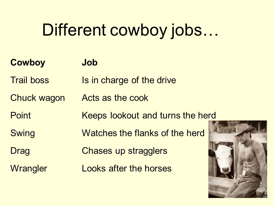 Different cowboy jobs… CowboyJob Trail bossIs in charge of the drive Chuck wagonActs as the cook PointKeeps lookout and turns the herd SwingWatches the flanks of the herd DragChases up stragglers WranglerLooks after the horses