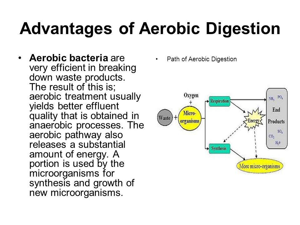 Advantages of Aerobic Digestion Aerobic bacteria are very efficient in breaking down waste products.